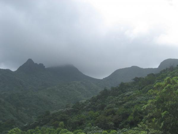 El Yunque: Journey to a Tropical Rainforest