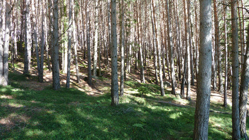 The United Nations has declared 2011 the International Year of Forests