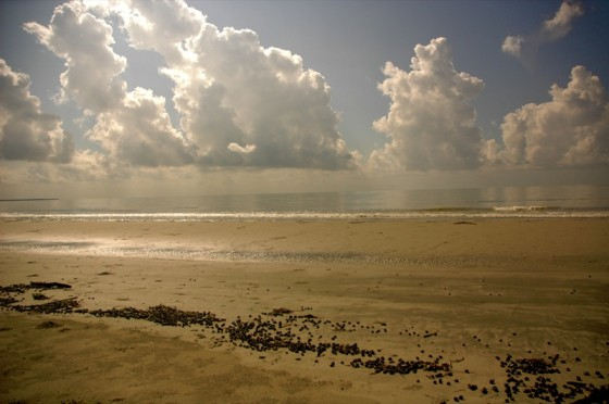 Mudflat and clouds in Sundarbans